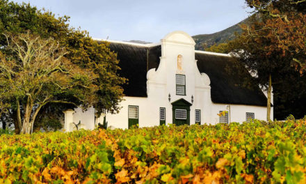 Expired:Privately guided day tour in the Constantia Wine Valley for 4 guests
